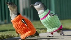 rex_penguin_sweaters_ll_111020_wblog